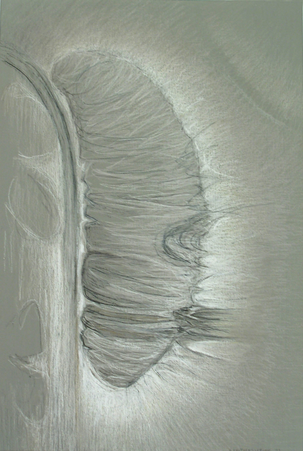 Shroud,  1997  Prismacolor on paper 18 x 14 inches