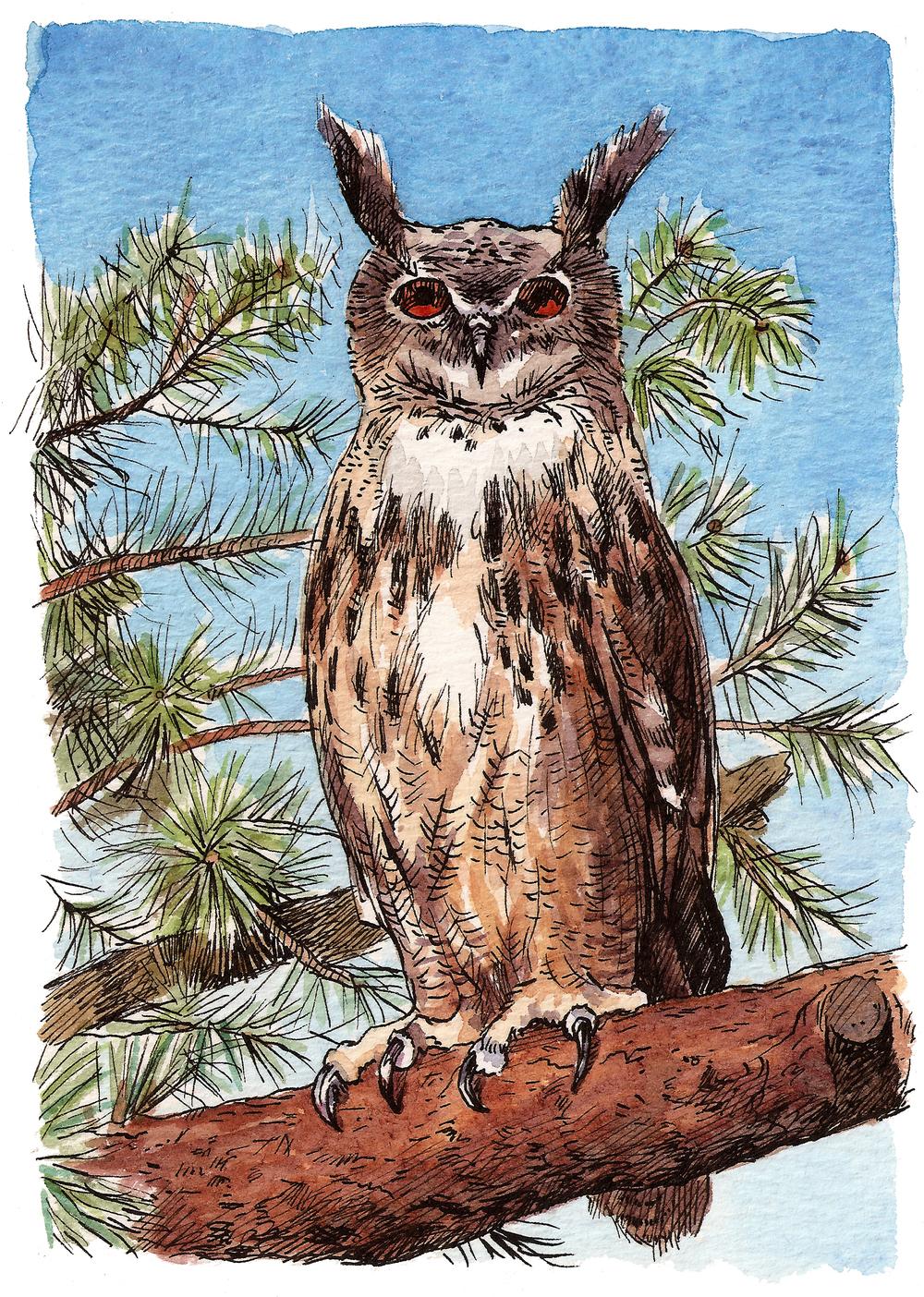 'Large Owl'