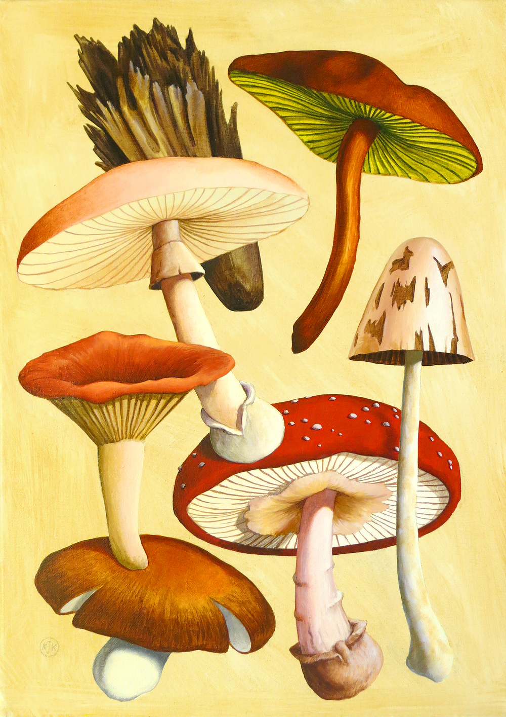 'Poisonous Fungi l'