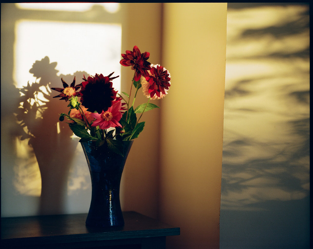 Flowers and light06.jpg