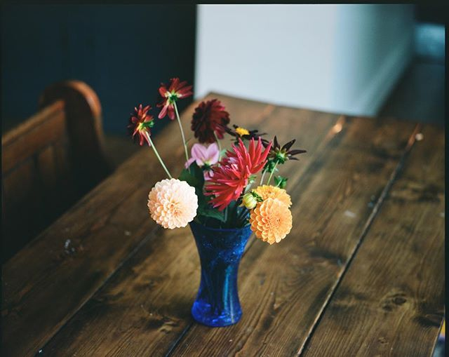 Beautiful flowers. Thank you @lou.rota They have lasted for ages. . . . . . . . #oftheafternoon #flakphotorepost #myfeatureshoot #mediumformat #filmphotography #filmisnotdead #back2thebase #somewheremagazine