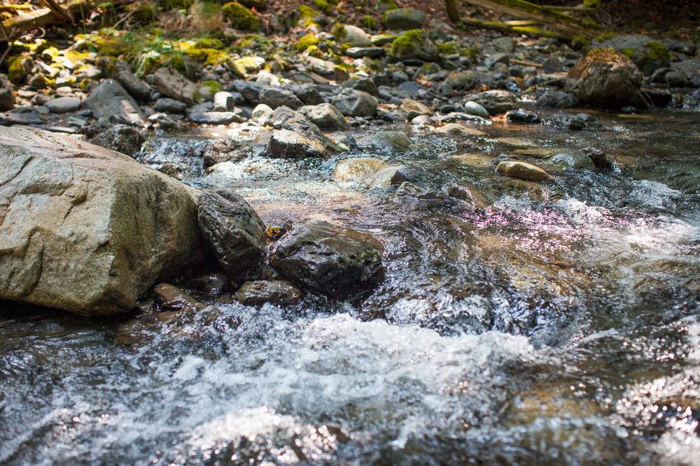 CreeksideMills-4932.jpg