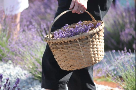 Feast in the Field - Date: October 10th, 2017Time: 6-9 pmCost: $45 per personFirst drink included follow by cash barJoin us October 10th for Feast in the Field! Dine under the stars and 100-year old oak trees, surrounded by lavender. Seasons Cafe & Catering will bring us a lavender-themed menu using local and seasonal dishes.  Seats are limited to 40, so don't wait to get your tickets!