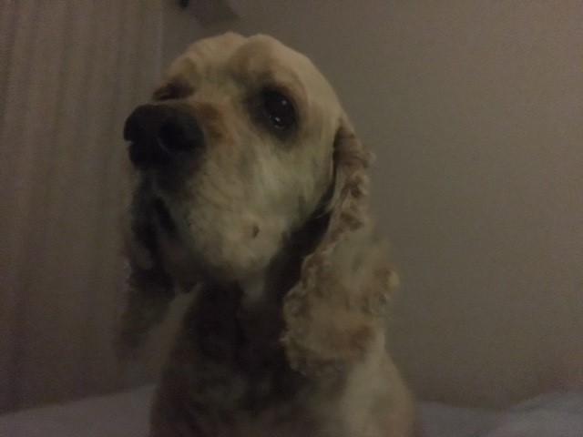 My dog, Chopper. He's a great dog.