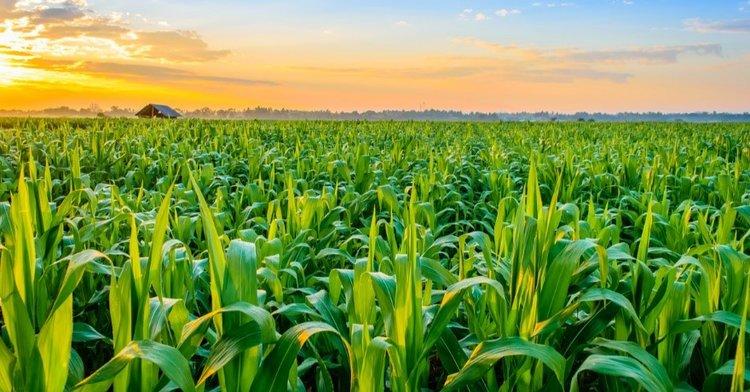 crop.jpg