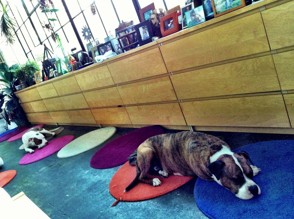 Consecutive dressers and colorful dot rugs complement this wall of windows. As do the dogs.