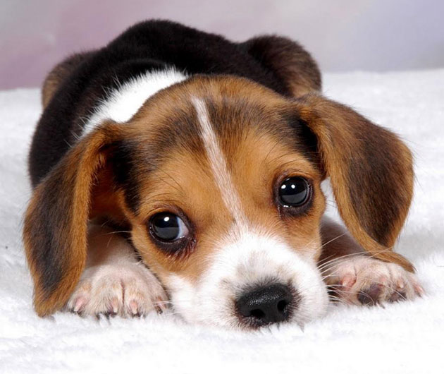 Biased training data makes this puppy sad. Do you want this puppy to be sad?