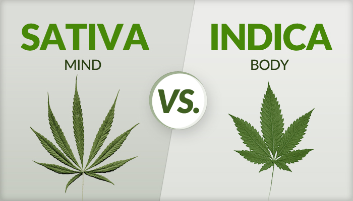 Sativa or indica for sex
