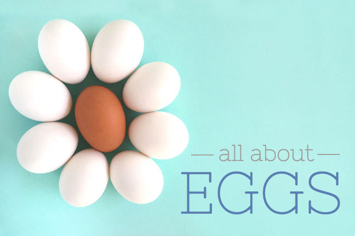 All About Eggs | Sprinkles for Breakfast