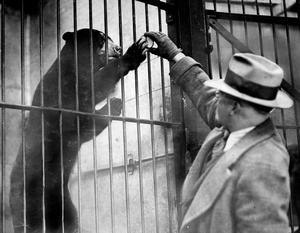 Yvette The Sun Bear At Franklin Park Zoo 1929