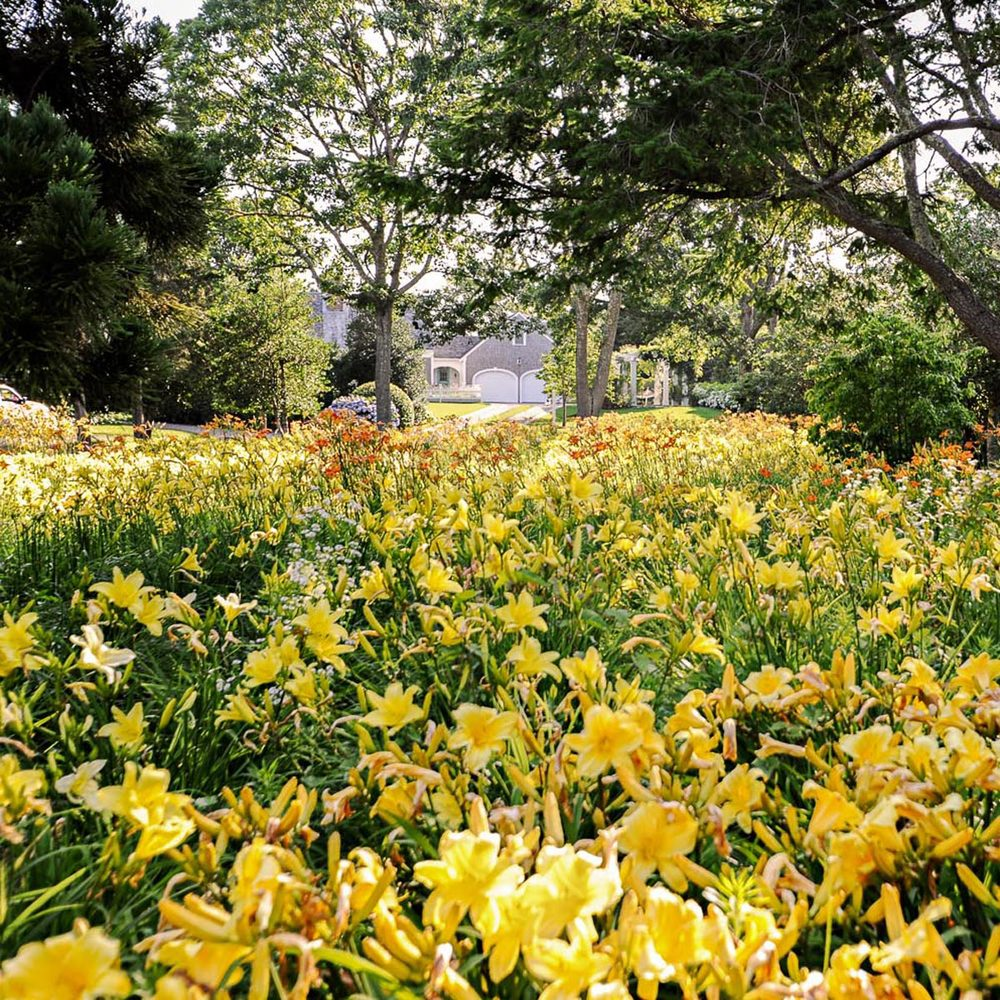 Lily Field, Chatham, MA Landscape Design