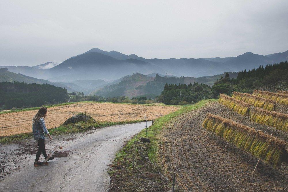 Miyazaki Area Guide | Sakamoto Rice Terrace