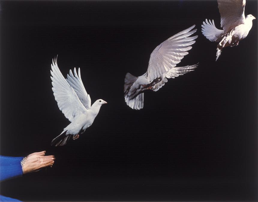 pigeon_release65002.jpg