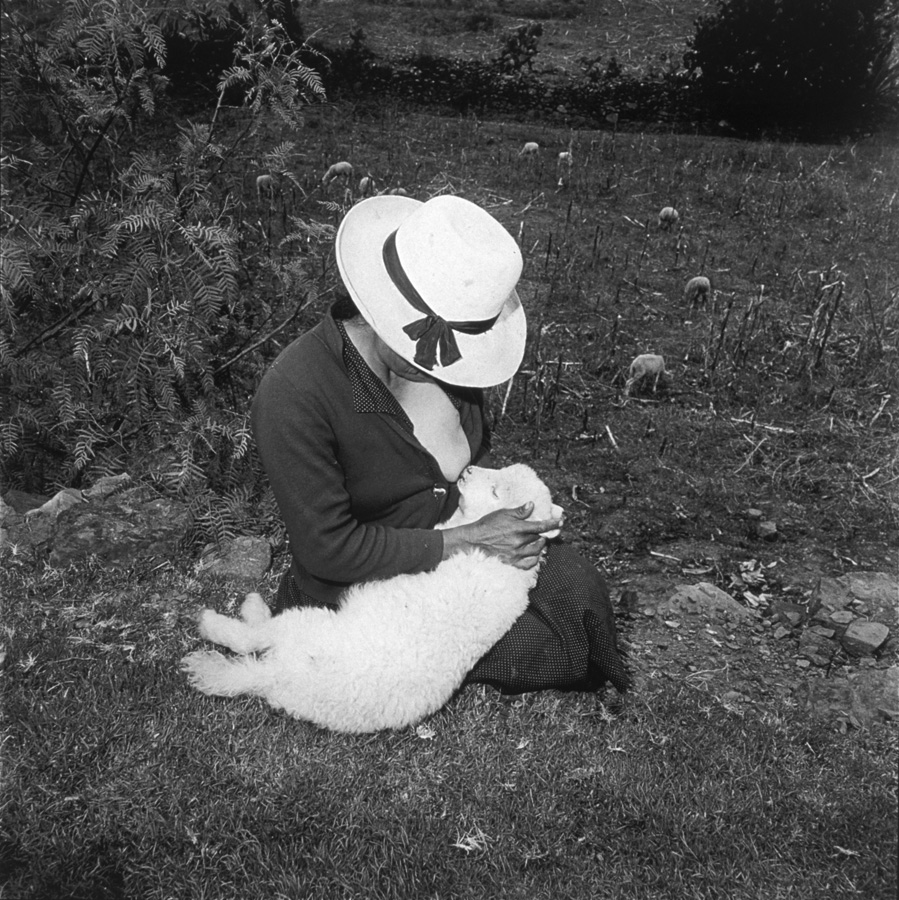 Catalin Valentine's Lamb.jpg