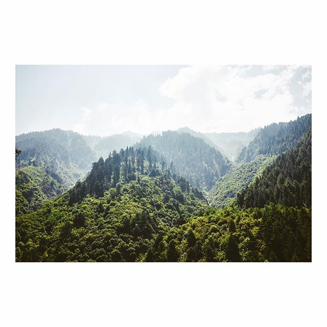 Mountains Covered in Pine (Kashmir)
