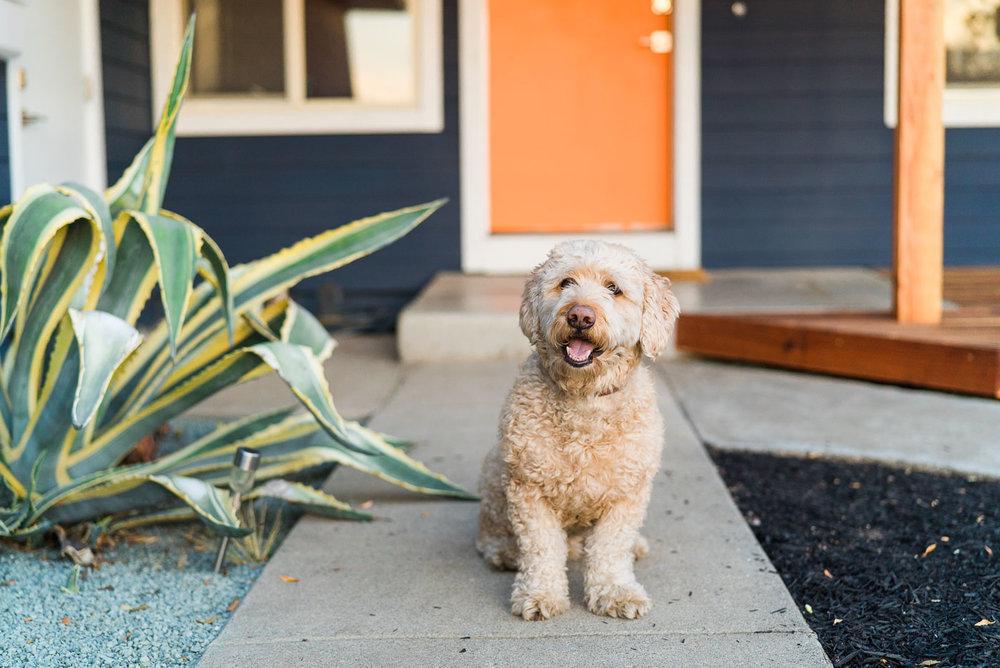 Bay Area home renovation-4.jpg