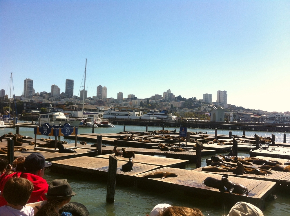 The famous seals of Pier 39! You'll never forget this sight. Hundreds of sunbathing, barking, and hilarious seals. Pick up some ice cream on the pier and enjoy the free show.