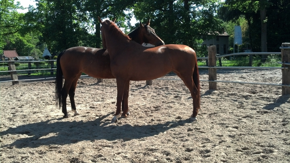 The Vitalis mare grooming her buddy...