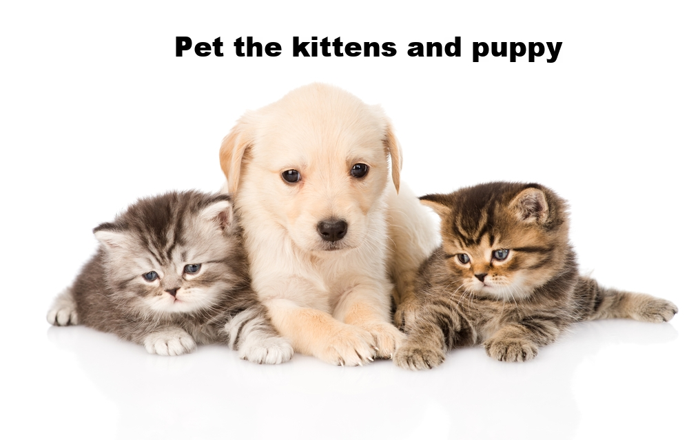 Pet the kitten and puppy