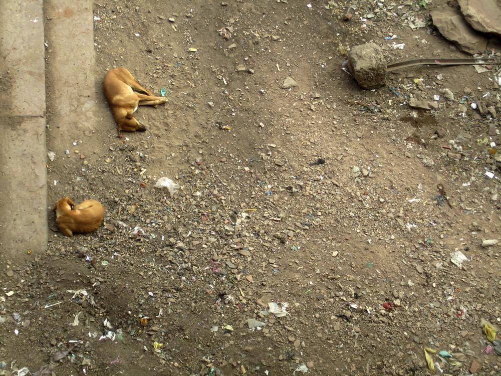 Delhi Agra_30Dec12 (6).JPG