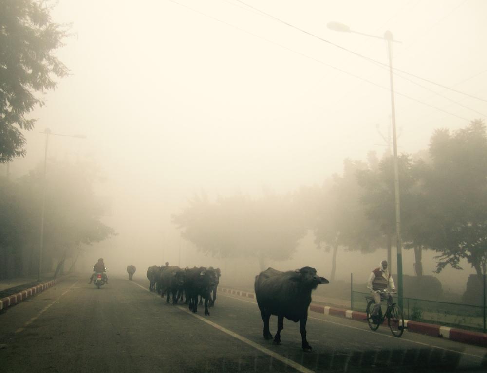 Delhi Agra_31Dec12 (107).jpg