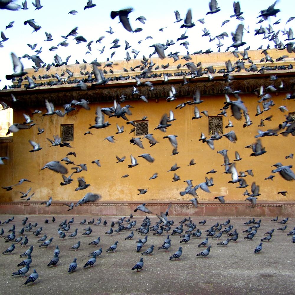 Jaipur 1Jan13 (14).jpg