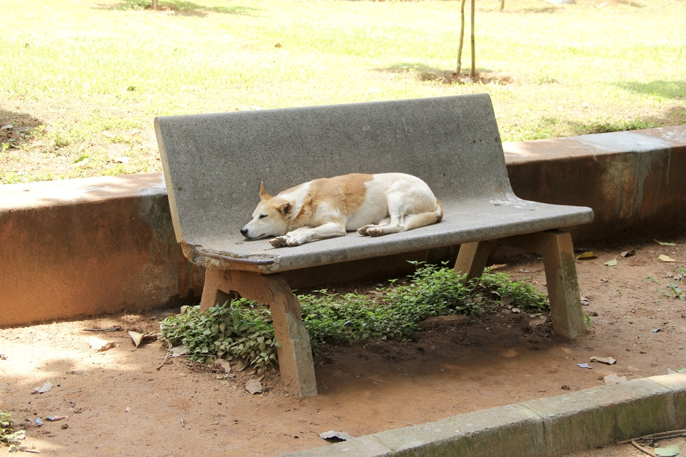 a stray dog takes a break on a bench in cubbon park, bangalore, india | beyond ordinary guides