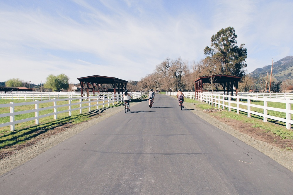 Biking into the Tamber Bey Vineyards Estate | Calistoga, CA