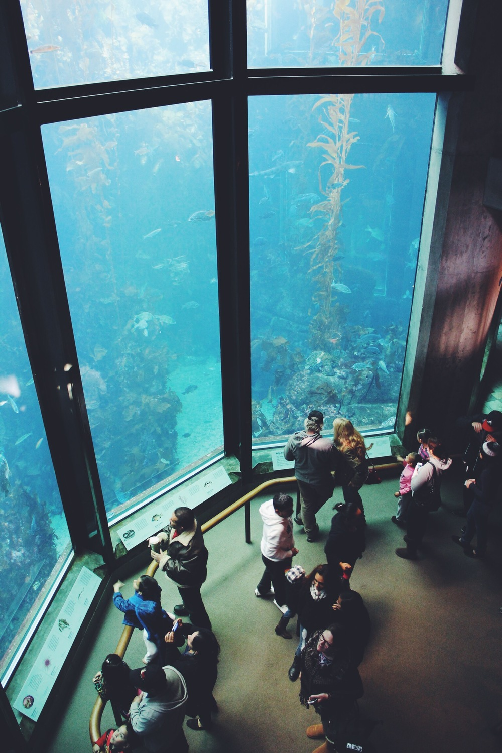 Visitors admire the Kelp Forest exhibit at the Monterey Bay Aquarium