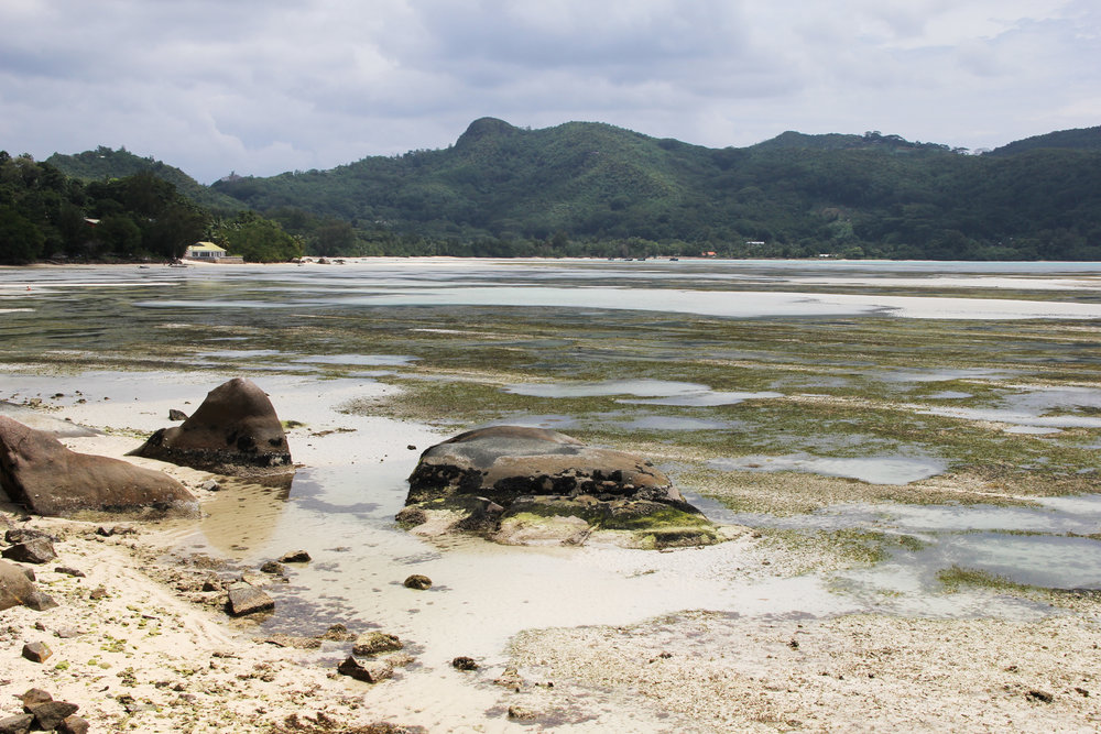 Your standard roadside view when exploring Mahe island in the Seychelles