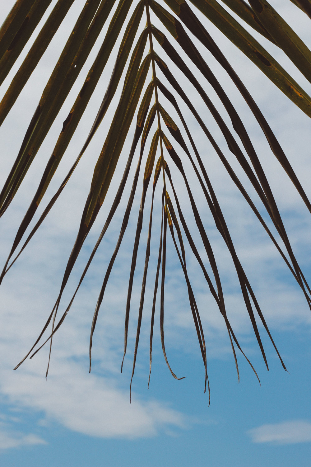 One of the best activities to partake in?  Laying on the beach and looking up at the palm fronds.