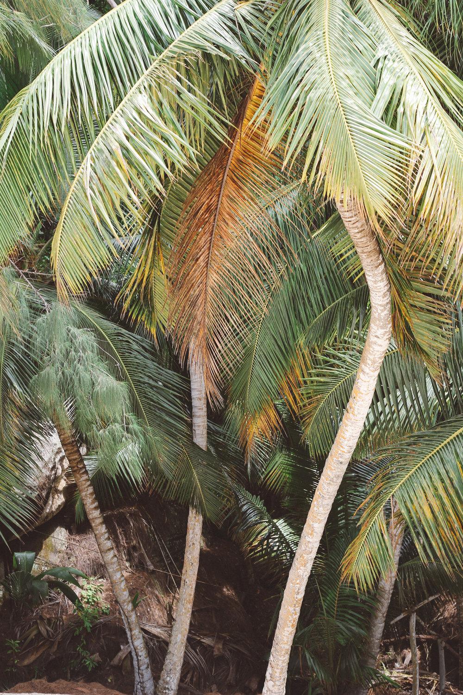 seychelles-40.jpg