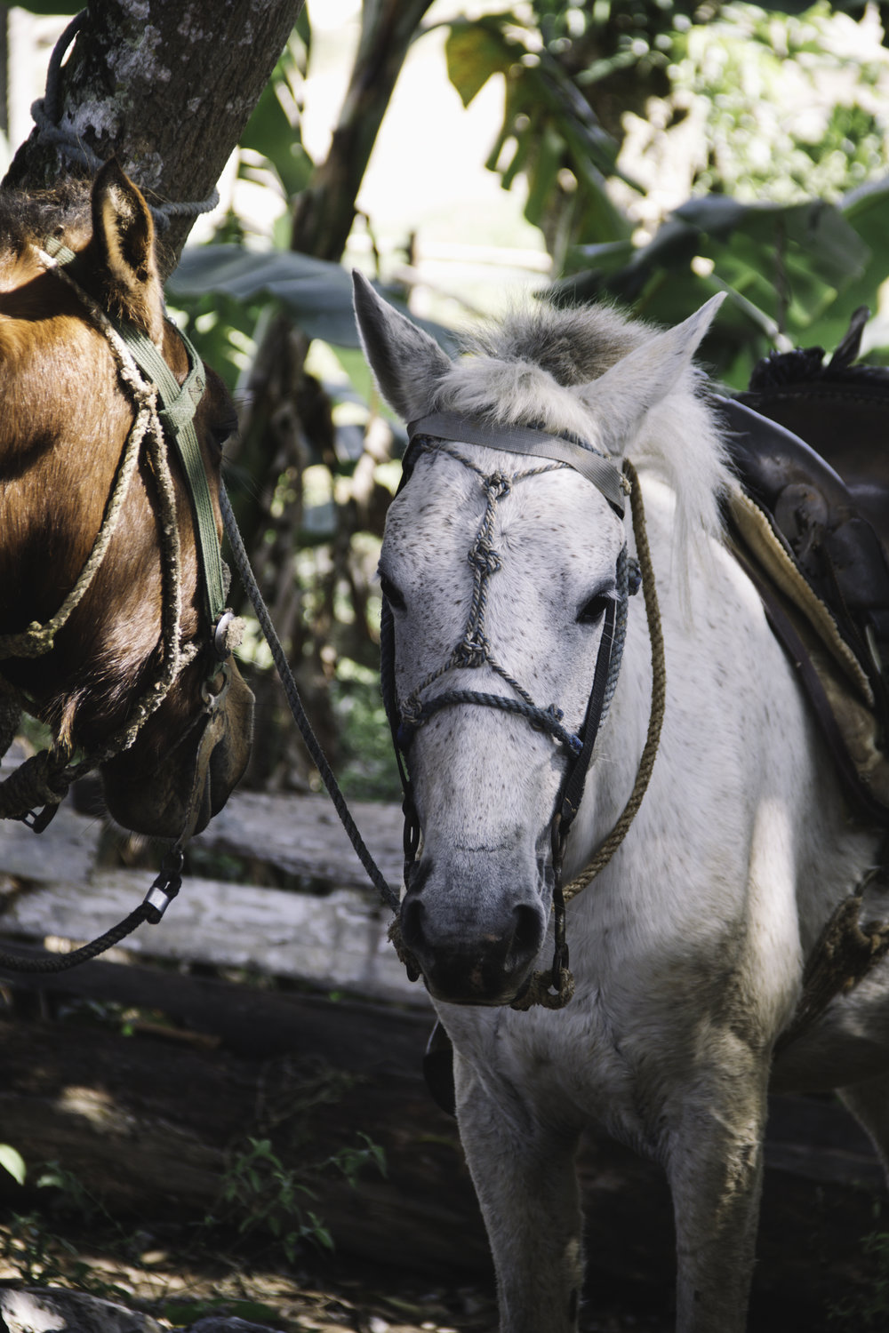 Our Favorite Day in Cuba | Horseback Riding in Vinales, Cuba | Beyond Ordinary Guides-14.jpg