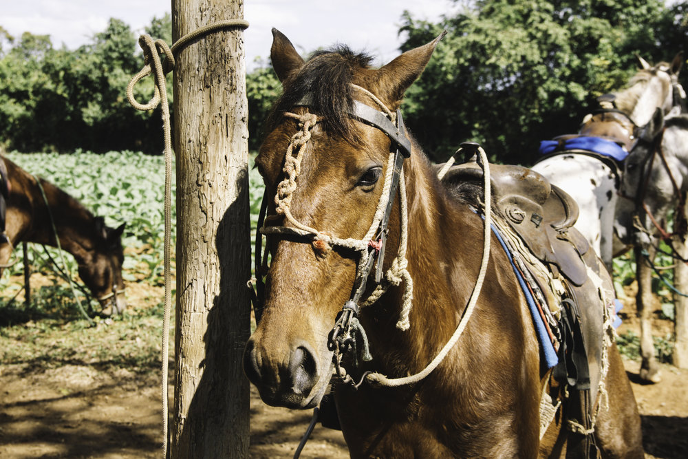 Our Favorite Day in Cuba | Horseback Riding in Vinales, Cuba | Beyond Ordinary Guides-16.jpg