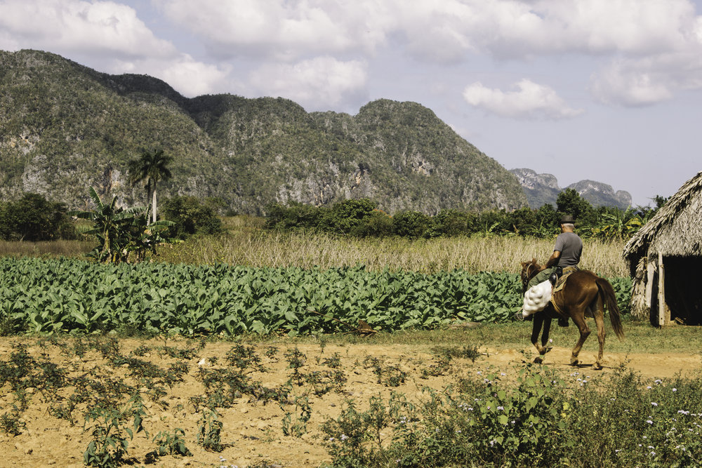 Our Favorite Day in Cuba | Horseback Riding in Vinales, Cuba | Beyond Ordinary Guides-34.jpg