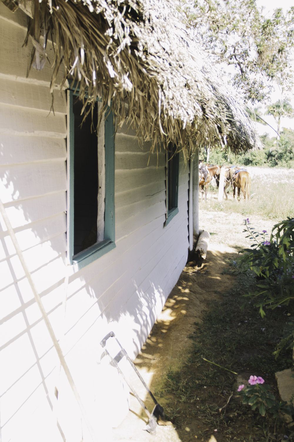 Our Favorite Day in Cuba | Horseback Riding in Vinales, Cuba | Beyond Ordinary Guides-45.jpg