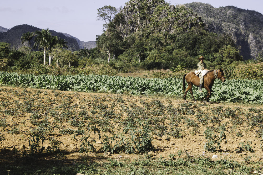 Our Favorite Day in Cuba | Horseback Riding in Vinales, Cuba | Beyond Ordinary Guides-53.jpg