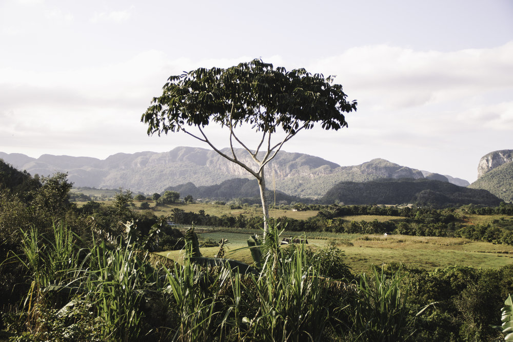 Our Favorite Day in Cuba | Horseback Riding in Vinales, Cuba | Beyond Ordinary Guides-74.jpg