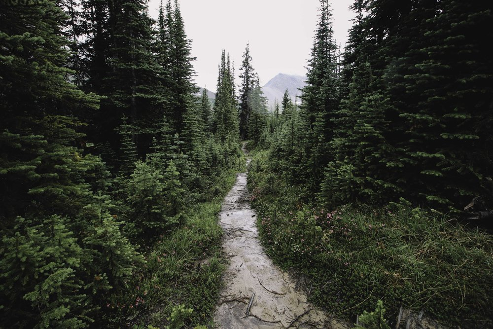 Hiking the Skyline Trail | Beyond Ordinary Guides-53.jpg