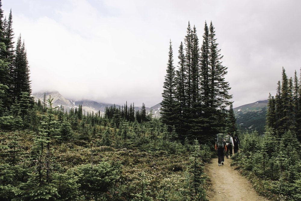 Hiking the Skyline Trail | Beyond Ordinary Guides-61.jpg