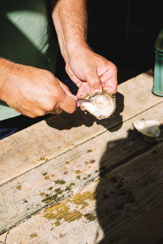 oysters in ston, croatia-8.jpg