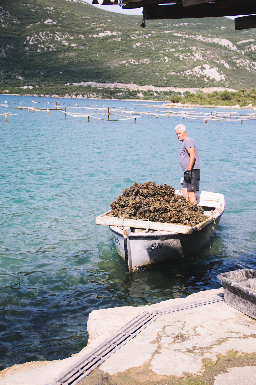 oysters in ston, croatia-11.jpg