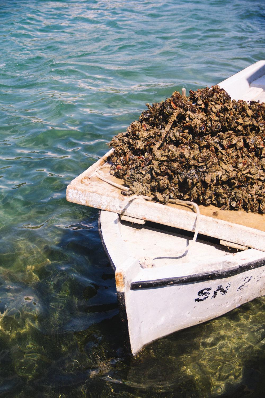 oysters in ston, croatia-13.jpg