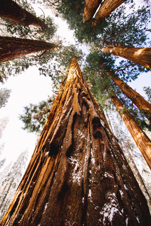 sequoia national park-202.jpg