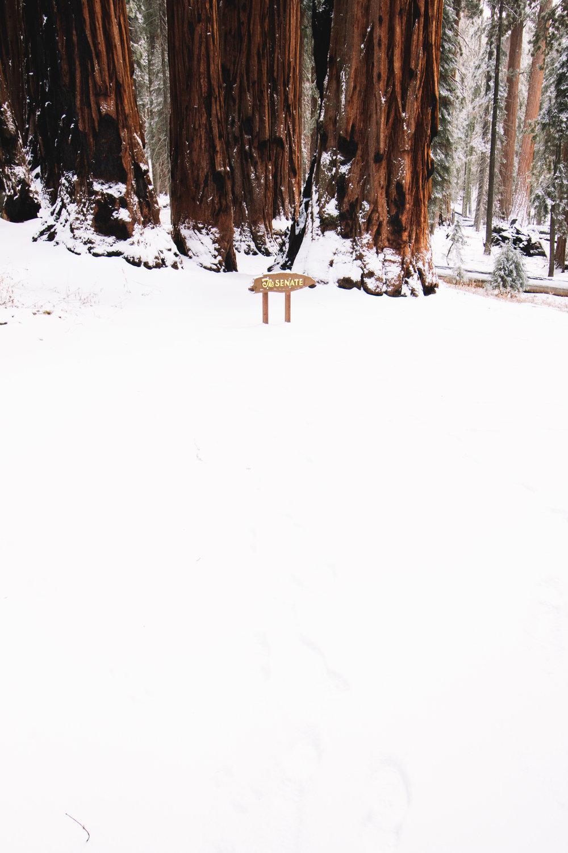 sequoia national park-196.jpg