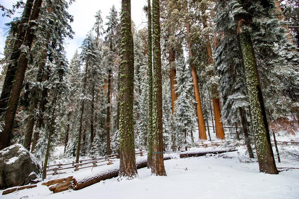 sequoia national park-94.jpg