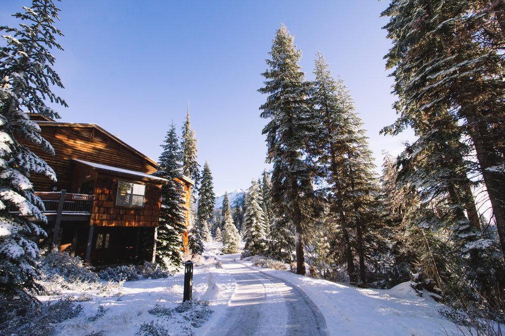 sequoia national park-16.jpg