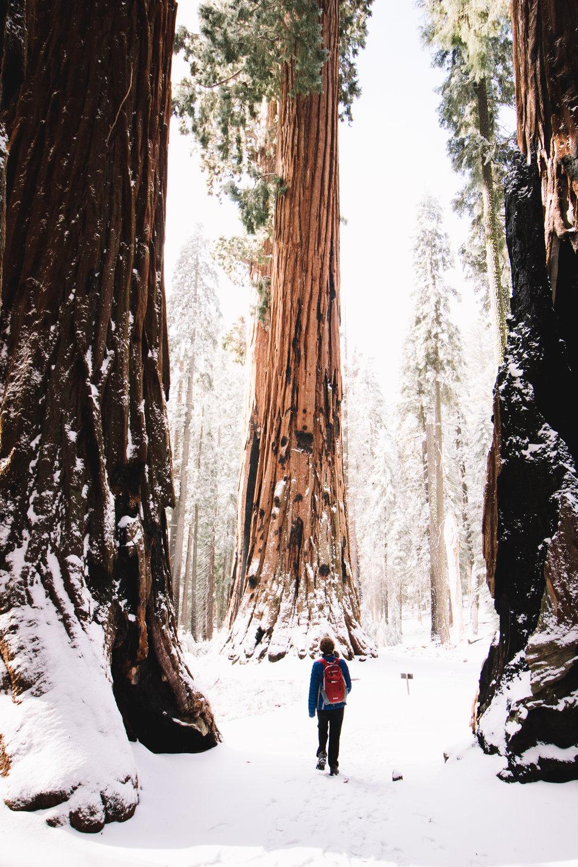 sequoia national park-206.jpg