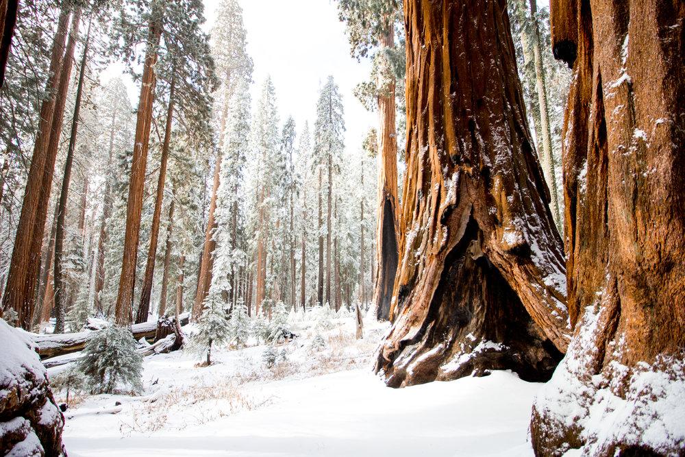 sequoia national park-213.jpg