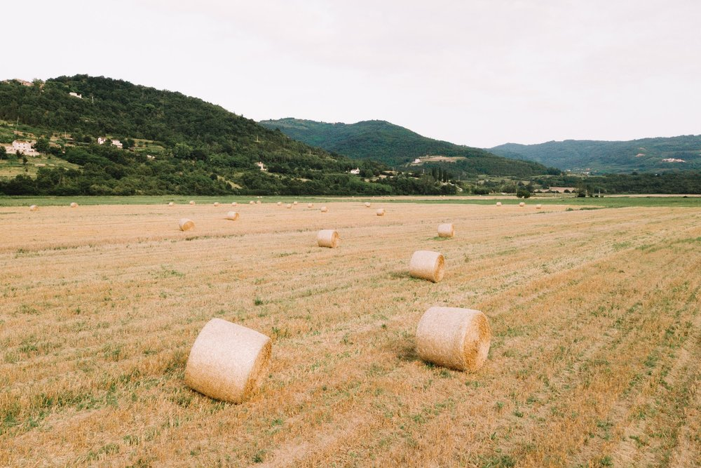 Hay bales in an Istria field